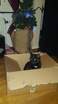 Alex - Katt -