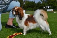 Zenobia - Hund - Phalene