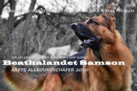 Namnlös - Hund - Schäfer
